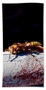 A Vespid Wasp  Beach Towel