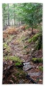 A Walk In The Forest Beach Towel