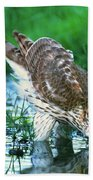 A Wild Juvenile Cooper's Hawk Drinks From A Pond Beach Towel