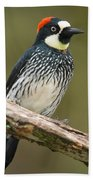 Acorn Woodpecker Melanerpes Beach Towel