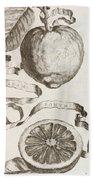 Adam's Apple Beach Towel by Cornelis Bloemaert