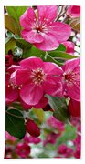 Adams Crabapple Blossoms Beach Towel