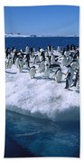 Adelie Penguins On Icefloe Antarctica Beach Towel by Colin Monteath
