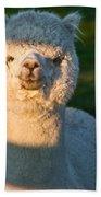 Adorable White Alpaca Portrait Beach Towel