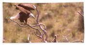 Adult Eagle With Eaglet  Beach Towel