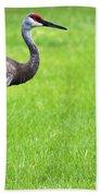 Adult Florida Sandhill Cranes Grus Canadensis Pratensis II Usa Beach Towel