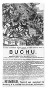 Advertisement: Buchu, 1871 Beach Towel