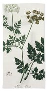 Aethusa Cynapium From Phytographie Beach Towel
