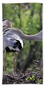 Affectionate Great Blue Heron Mates Beach Towel