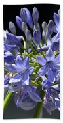 African Blue Lily Beach Towel