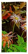 African Daisies In Aswan Botanical Garden On Plantation Island In Aswan-egypt Beach Towel