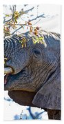 African Elephant Browsing In Kruger National Park-south Africa Beach Towel