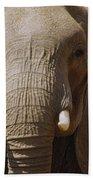 African Elephant Close Up Amboseli Beach Towel
