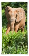 African Elephant Coming Through Trees Beach Towel