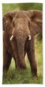 African Elephant Beach Towel by David Stribbling