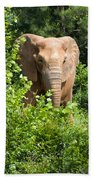 African Elephant Eating In The Shrubs Beach Towel