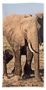 African Elephant Mother And Calf Beach Towel