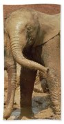 African Elephant Orphans Playing In Mud Beach Towel