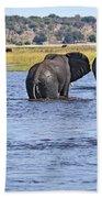 African Elephants Crossing Chobe River  Botswana Beach Towel