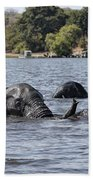 African Elephants Swimming In The Chobe River Beach Towel