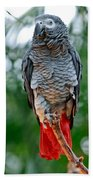 African Grey Parrot Beach Towel
