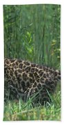 African Leopard Cub In Tall Grass Endangered Species Beach Towel