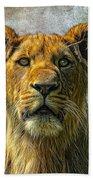 African Queen Beach Towel
