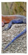 African Safari Lizard Beach Towel