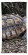 African Spurred Tortoise Beach Towel