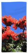 African Tulip Tree Beach Towel
