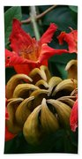 African Tulip Tree Beach Towel
