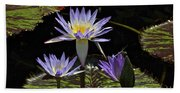 African Waterlily Dazzle -- Plus Dragonfly Beach Towel