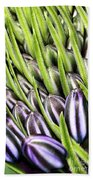 Agapanthus Buds Beach Towel