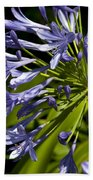 Agapanthus Flower And Bee Beach Towel