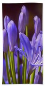 Agapanthus - Lily Of The Nile - African Lily Beach Towel