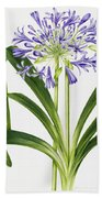 Agapanthus Beach Towel