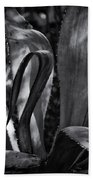 Agave Black And White Dsc08571 Beach Towel