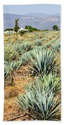 Agave Cactus Field In Mexico Beach Towel