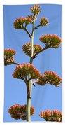 Agave Flowers II Beach Towel