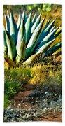 Agave In Secret Mountain Wilderness West Of Sedona Beach Sheet