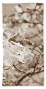 Antique Magnolia Bloom Beach Towel