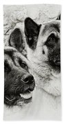 Akitas Beach Towel