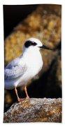 Alabama Tern Beach Towel