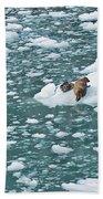 Alaska Seals Beach Towel