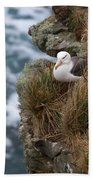 Albatross Rookery Beach Towel