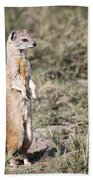 Alert Yellow Mongoose Beach Towel