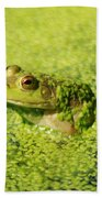 Algae Covered Frog Beach Towel