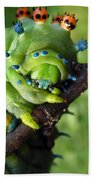 Alien Nature Cecropia Caterpillar Beach Towel