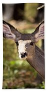 All Ears - Mule Deer Fawn - Casper Mountain - Casper Wyoming Beach Towel