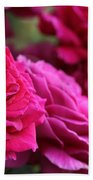 All The Fuchsia Pink Roses  Beach Towel